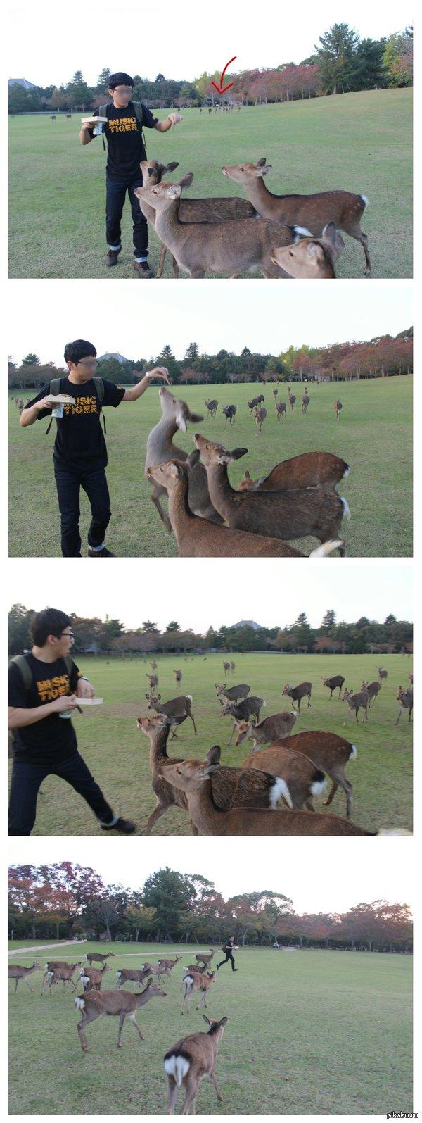 Не корми оленей!