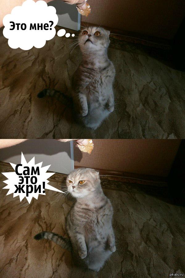 Неопределённая кошка, как и все женщины...