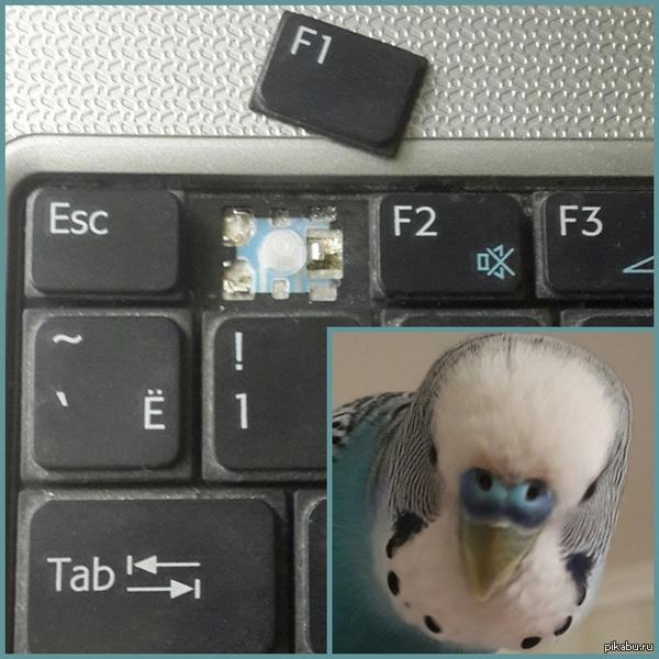 Интересно, зачем моему попугаю так понадобилась справка?