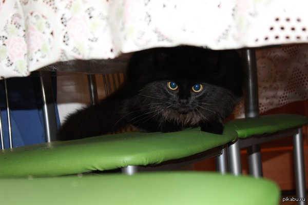 Мой черный плащ Зовут коша или уголёк)) это не так важно, любим ее