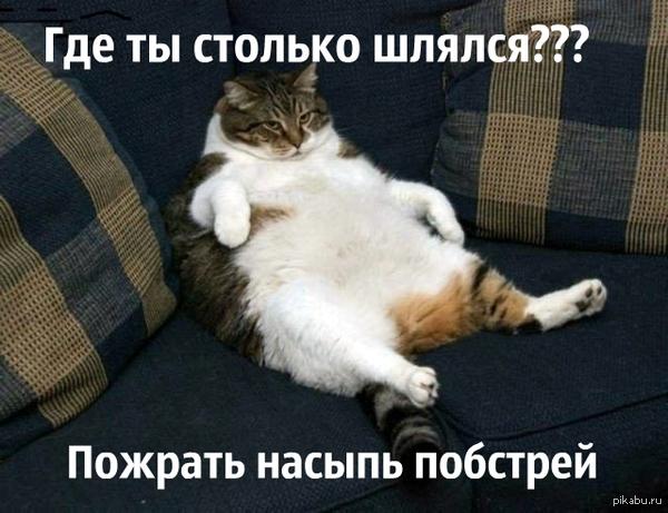 "Кот встречает хозяина,которого не видел 2 года. В ответ на пост <a href=""http://pikabu.ru/story/sobaka_ne_videla_khozyaina_2_goda_3161013"">http://pikabu.ru/story/_3161013</a>"