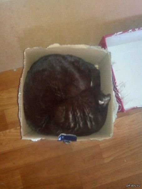 Чем меньше коробка, тем удобнее в ней лежать.