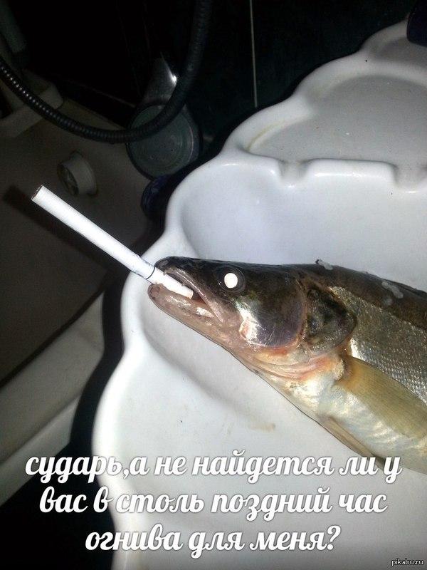 Значит наловил батя рыбы.   А рыбак он ещё тот) И от нехер делать, решил я шуткануть)  Пятница как никак.