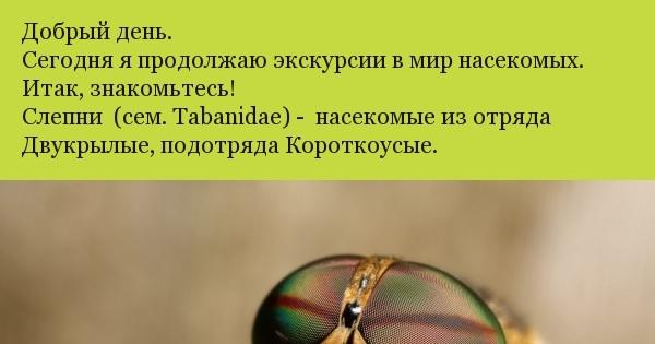 solominkoy-v-popu-seksualnie-foto-na-ribalke