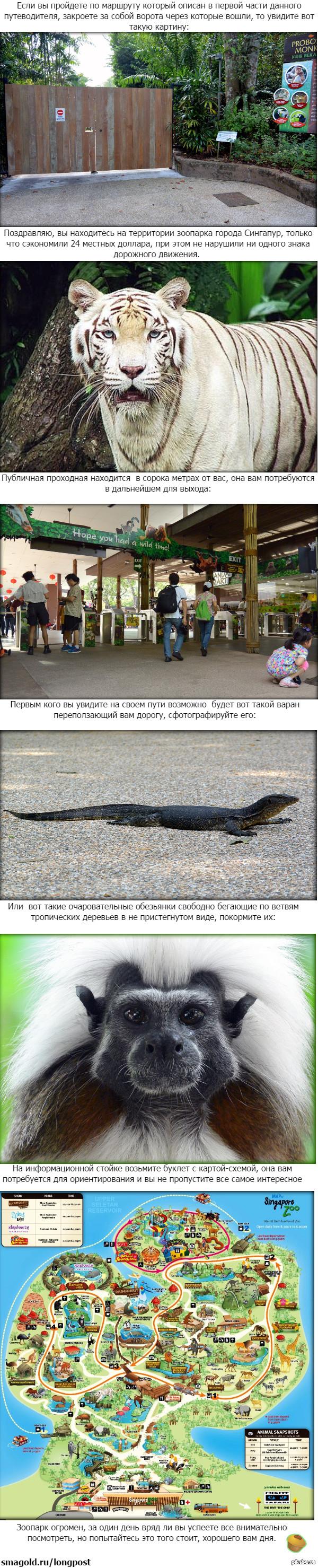 Зоопарк Сингапура - самый дорогой в мире. Как пройти бесплатно. Часть вторая.