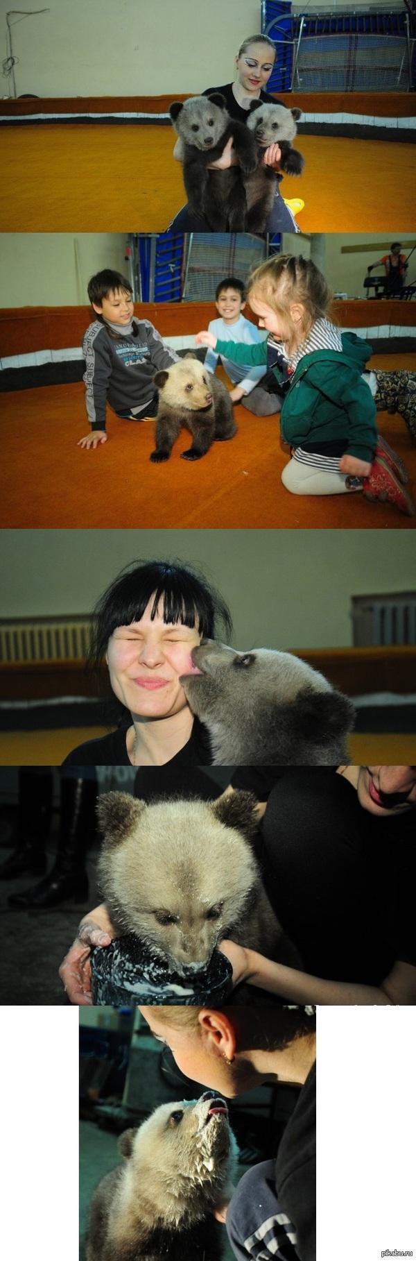 Двух маленьких медвежаток обнаружили в тайге Обнаружили в семистах километрах от Екатеринбурга. Берлога была раскурочена, а медведицы на месте не было.  З.Ы.: Знаю знаю Paint master, сильно не пинайтесь