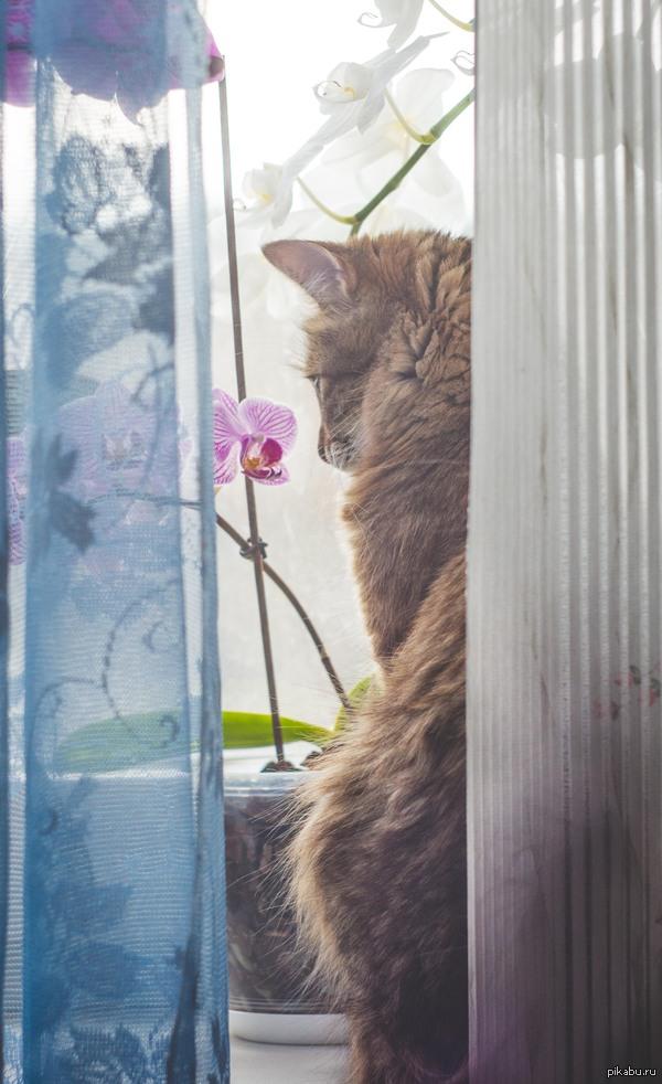 Моя кошка) Моя кошка- довольно таки романтическая личность и настоящая женщина- спит только с моей стороны кровати,встречает с работы,будит когда забыл включить будильник.