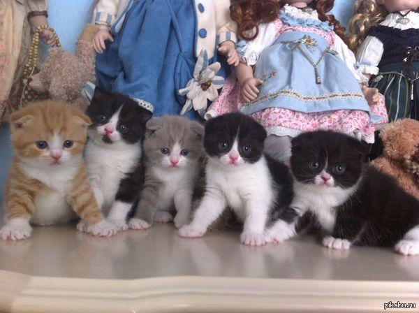 Когда жена увлеклась кошками 5 котят,3 взрослых кошки (одна беременна)