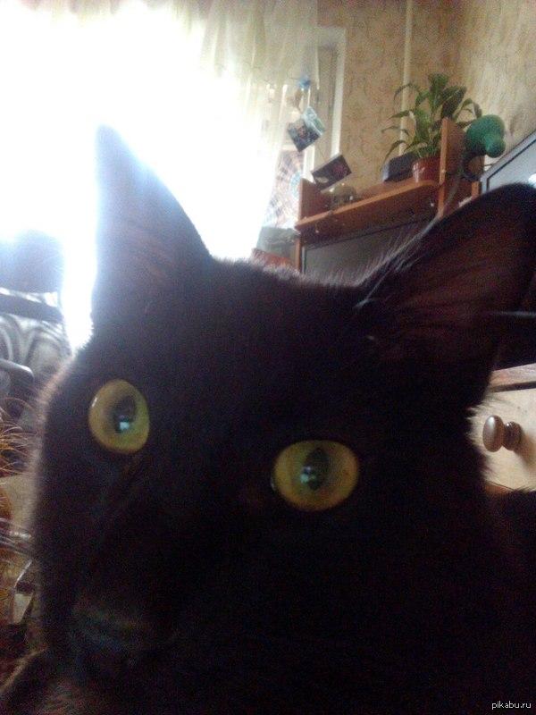 Миша походу Гиви Наш кот немножечко грузин