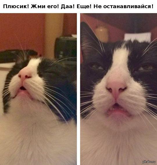 А что если... А что если вчерашний кот выключал плюсы именно по этой причине...