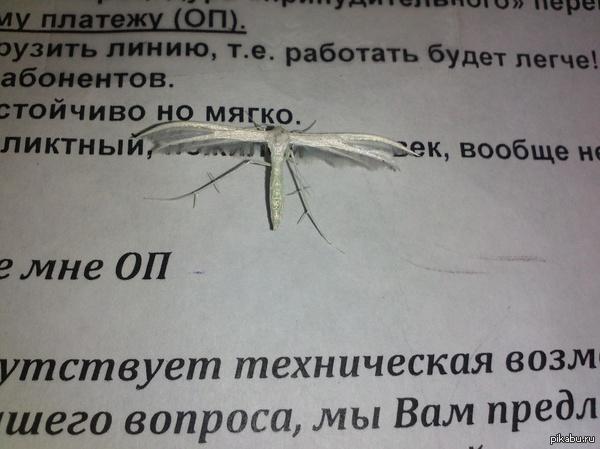 Вперёд, энтомологи! в 2012 году, будучи находясь на рабочем месте в офисе, ко мне приземлилась вот такая шняга.Уже 3 года я не могу найти ответ на вопрос-who is it? #helpmeplease