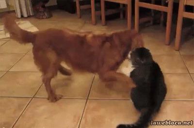 Кошки и собаки!