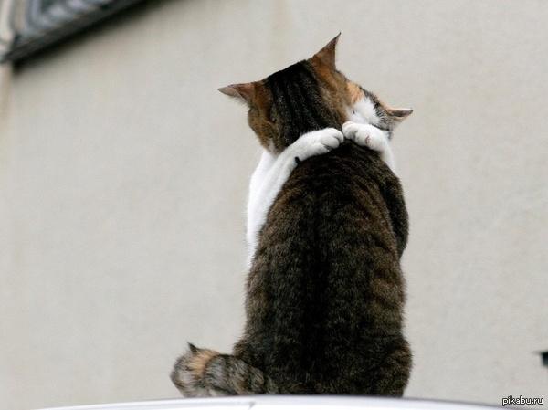 """Международная фелинологическая ассоциация """"FARUS"""" наградит в России котов-героев, которые спасли жизни своим хозяевам. описание внутри"""