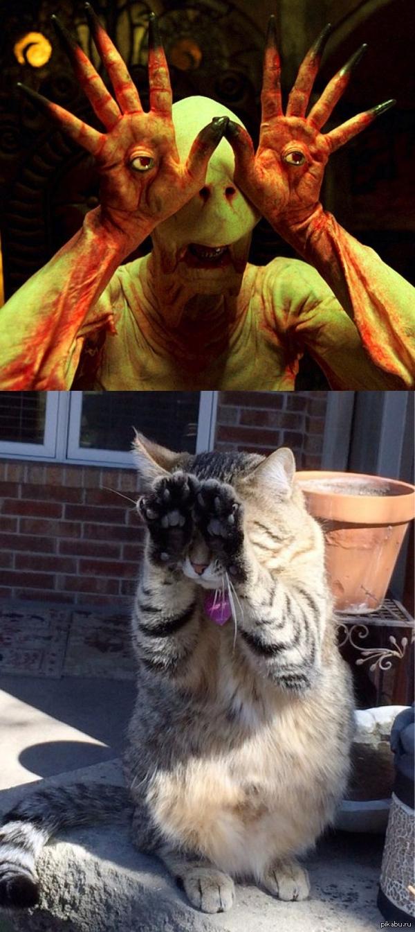 Бледный человек (Лабиринт Фавна) - котейкина версия фото кота натолкнуло на мысль..)