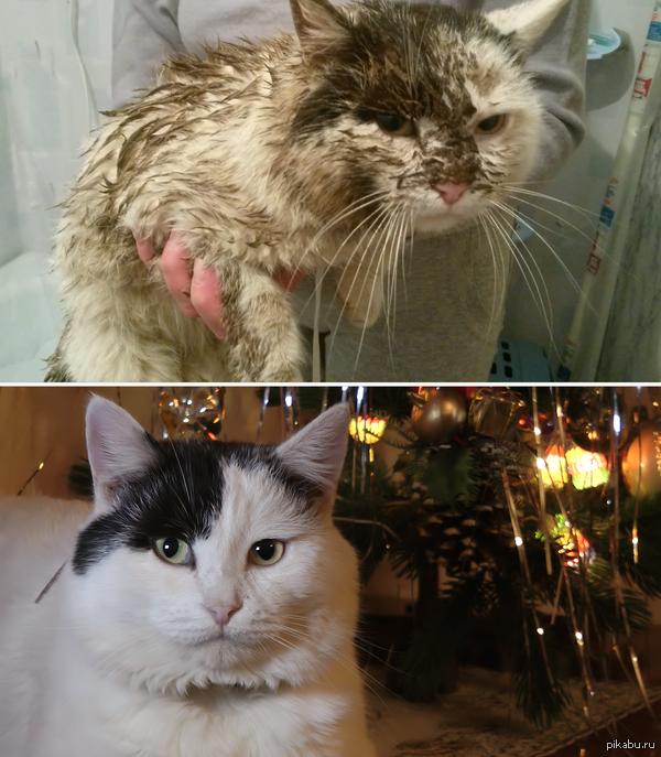 Мой кот в период весеннего обострения и в спокойный зимний период. Фото сделаны на Samsung Galaxy c4 mini