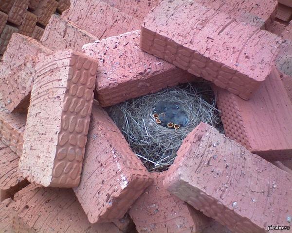 Продолжая тему гнезд с птенцами Кирпичи были завезены с запасом, более 2 месяцев лежали в отдалении. Когда понадобились - увидели это. Кирпичи никто не трогал, почему лежат кругом - загадка))