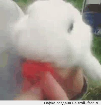 Кролик кушает клубничку Дабы разбавить котов. Качество, увы, не ахти