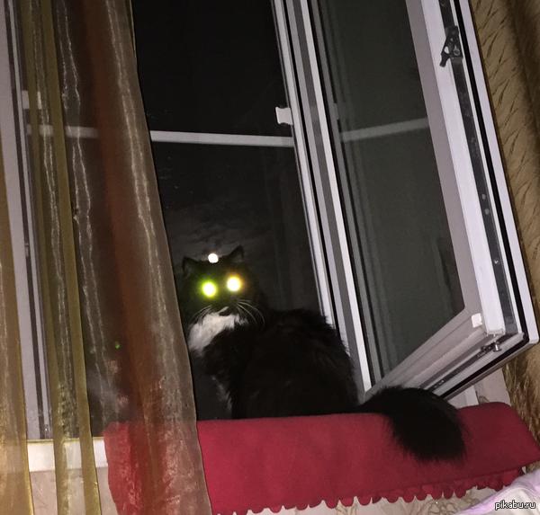 Просто кошка и луна