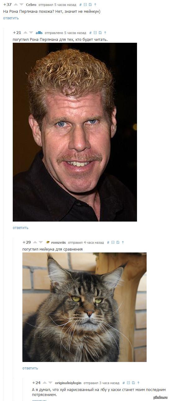 Кот похожий на рона перлмана