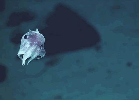 Вот такую милоту нашли на глубине 6 км