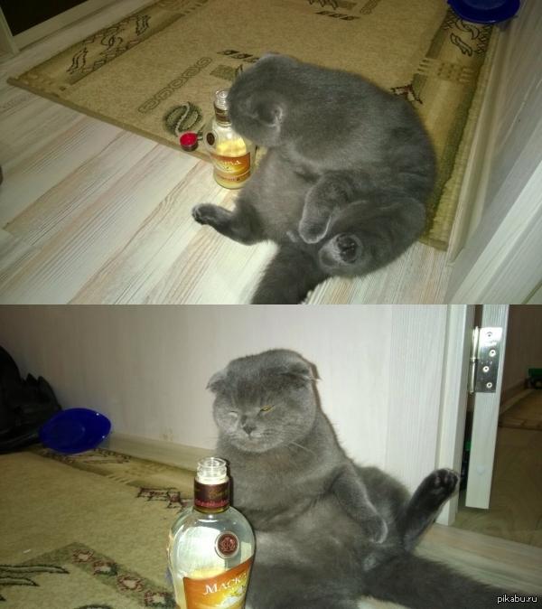 пьющий кот горе в семье картинка сама это прекрасно