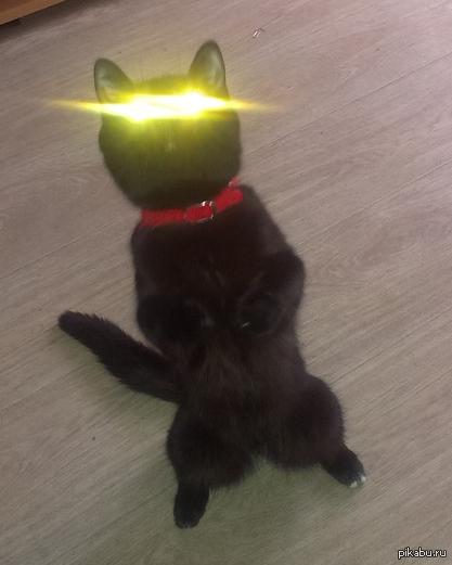 все открытка флэш котик этого был