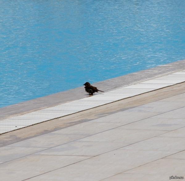 Мокрая птичка