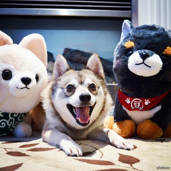 Счастливый щенок