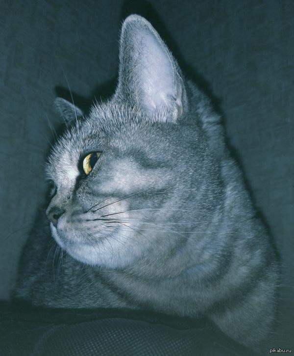 Просто кошка. Фоткал ночью со вспышкой на телефон Meizu mx4.