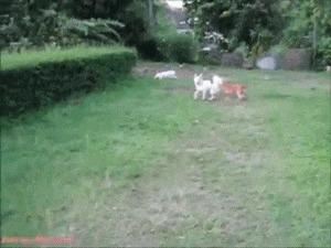 Собаки Майкла Бэя