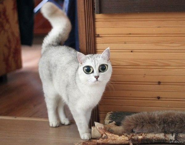 """Народ продолжает спрашивать """"нашёлся ли Пепячник?"""". ДА, котяру нашли!!!! Подробнее в каментах. ВСЕМ кто помогал - СПАСИБО от душ для минусов ничо не оставляю, мой рейтинг лопатой не зарубишь)"""