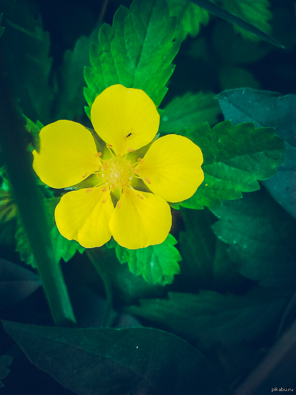 Цветы , даже самые простые, -чудо природы Раз всех так напугали маки, то ловите другой цветок)))