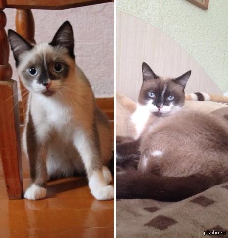 с возрастом коты приобретают взгляд небрежного презрения