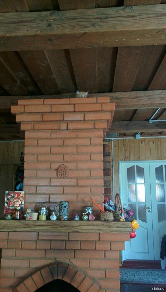 Первый раз привезли кота на дачу. Похоже, ему не очень там понравилось