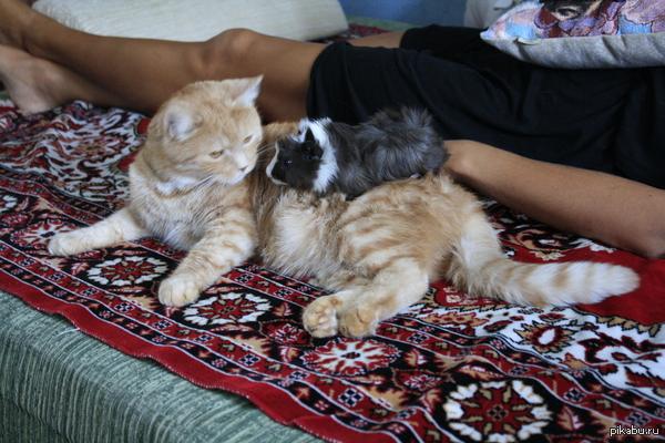 Мои домашние животные