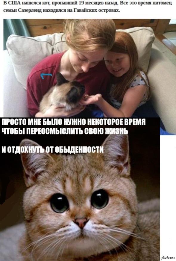 А котик может и не хотел возвращаться В США нашли кота после 19 месяцов пропажи