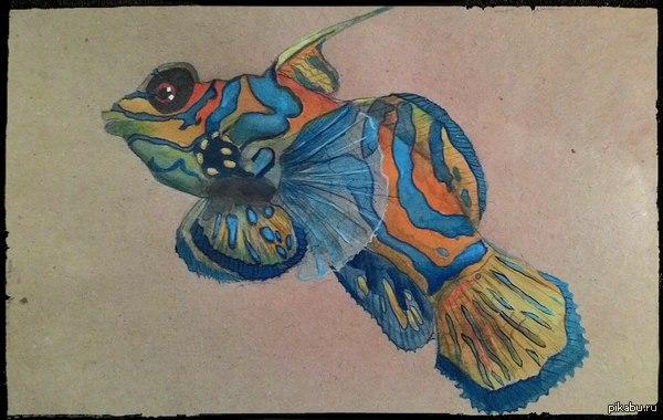 Жена рисует акварелькой Вот такая рыбка получилась) в комментах еще