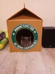 Домик для мопса мопс, дом, домашние животные, Собака, длиннопост, фотография, будка, вольер