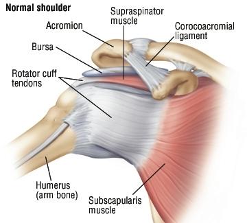 Боли плечах суставах болят суставы и мышцы рук чем лечить