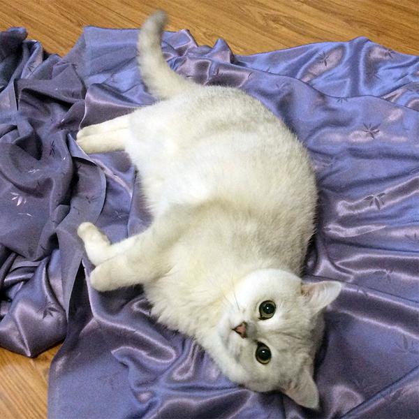 Все любят котов кот, шитье, ткань, любимыйпитомец, длиннопост