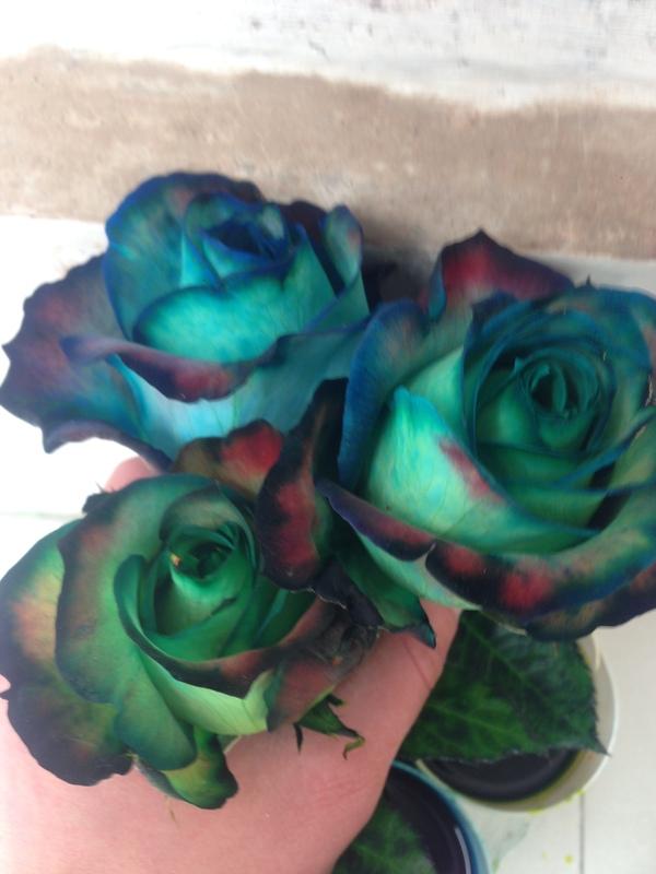 Эксперементирую с покраской роз. Эквадор покраска роз, эквадор, моё, длиннопост