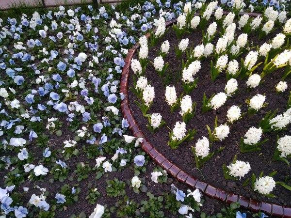 Пикабу умный помогите опознать белые цветы на клумбе. Поспорили.