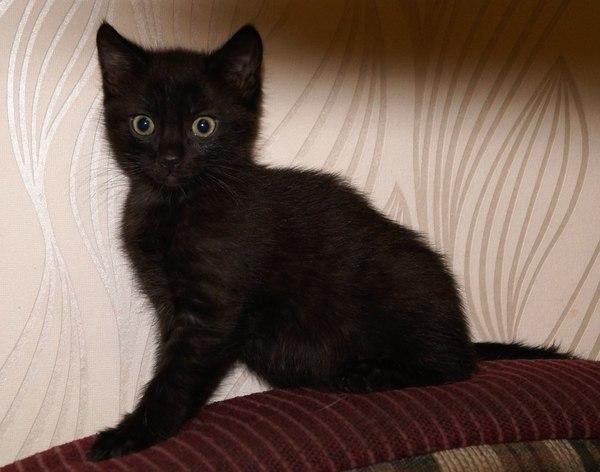 Кошка и котята ищут дом. Саратов и Энгельс кот, кошки и котята, пристройство, Саратов, Энгельс, Лига Добра, Помощь, длиннопост