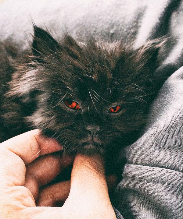 angry wet kitten - 700×839