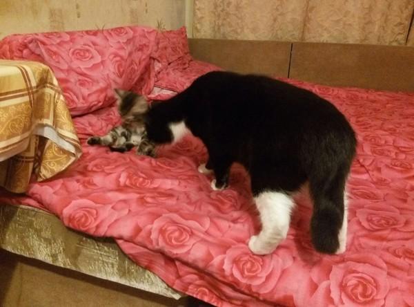 История одного кота. Кот, Моё, Животные, Длиннопост
