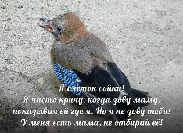 Весна пришла... ЦРХП, Птицы, Хищные птицы, Слетки, Длиннопост