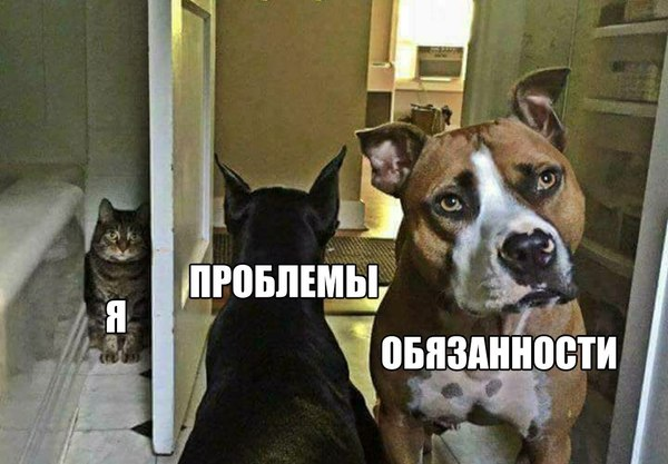 Но я не возмутим Собака, Коты и собаки вместе, Кот