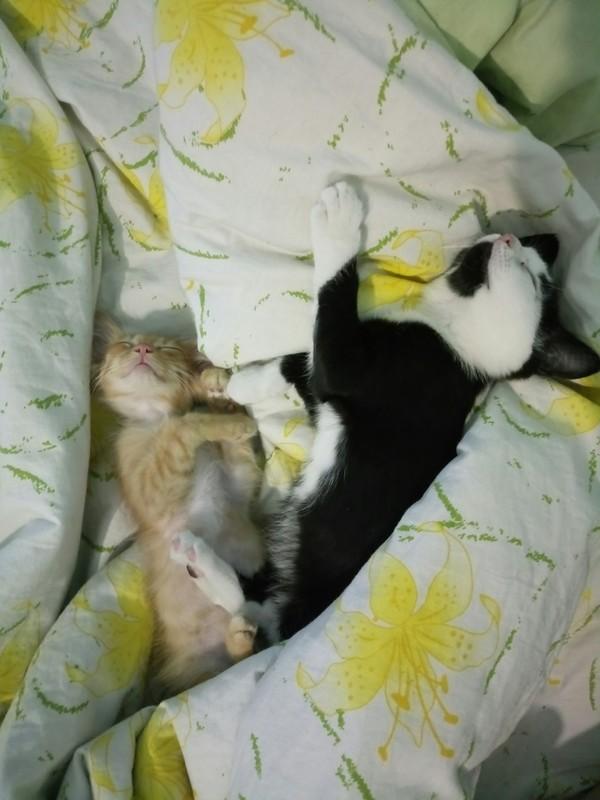 Малышата Кот, Кошки и котята, Котята, Котомафия
