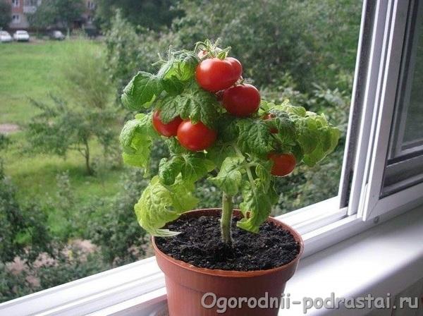 Впер бабе по самые помидоры фото 412-295