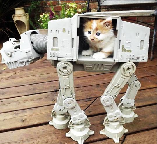 Котики и Star Wars